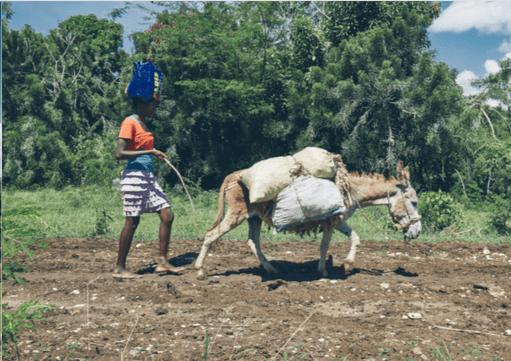 Esel Haiti